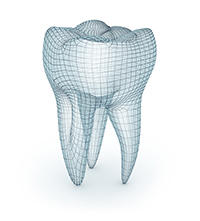Diagram of a tooth at Cassity & Legacy Implants and Periodontics in South Ogden and Kaysville, UT